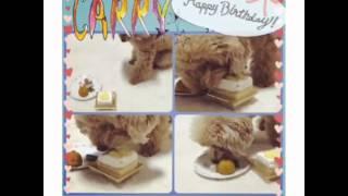 HappyBirthday...Dear CARRY                 #愛犬 #きゃりー #5歳 #犬...