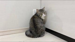 仕事中にかまちょの猫を無視してたら隣の部屋でこうなってました…