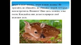 Экологическая игра викторина «В гостях у леса»(, 2015-10-14T15:00:00.000Z)