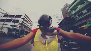 Путешествие с собакой   Не предавай мечту   Mood Видео(Чихуахуа Софи - собака, которая летала на самолетах, ездила в поездах, на автобусах, машинах, мотоциклах,..., 2015-01-10T04:38:45.000Z)