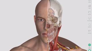 Common Injuries in Rugby | Complete Anatomy