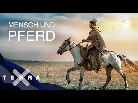 Die ersten Reiter