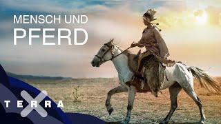 Wie kam der Mensch aufs Pferd? | Terra X