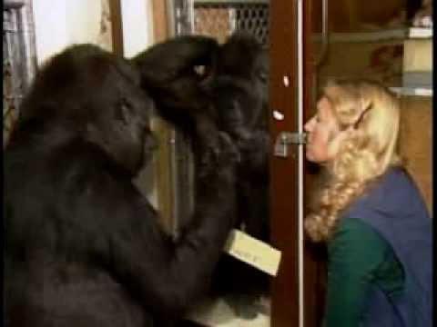 A Conversation with Koko, Mini-Trailer