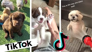 TikToks That Make You Go AAWWW ~ Nothing Cuter Than Cute Little Puppies ~ Funny TIK TOK Dogs
