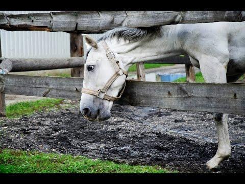 White horse eating grass in 4K