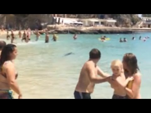 Panicked beach-goers run to shore as blue shark swims in shallows