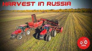 Efficient sugar beet harvest in Russia
