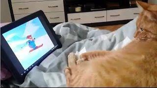 Кошка мультик смотрит