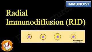 Radial Immunodiffusion (Mancini Technique) (FL-Immuno/57)