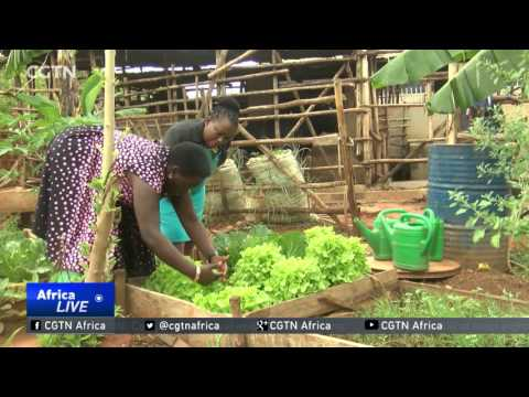 Helping women take up urban agriculture in Uganda
