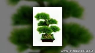 Искусственные цветы купить(Скачать каталоги http://treez.com.ua/catalogus.php Звоните 0675386672 http://treez.com.ua ИНДИГО - прямой поставщик: искусственные раст..., 2015-08-28T19:26:16.000Z)