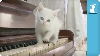 Kitten Concerto, Fifth Movement - Kitten Love