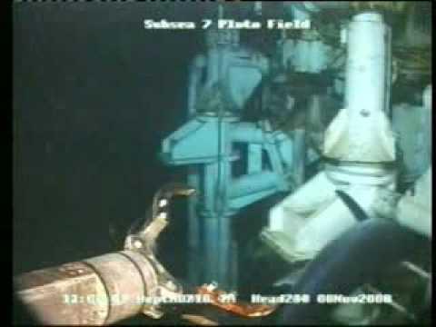 Swordfish Stuck In Off Shore Oil Rig