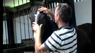 Michael Peace works with a Headshy Horse
