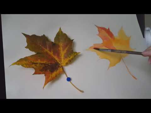 Как раскрасить кленовый лист акварелью