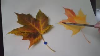 Кленовый лист. Акварель для начинающих. Лессировки. Видеоурок #1