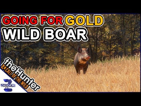Going for Gold WILD BOAR LIVE TheHunter Call of the Wild 2018