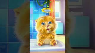 Lagu bintang kecil kucing lucu