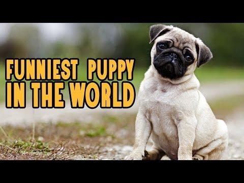 Vodafone Dog Breed || Pug Breed || Nappets Dog