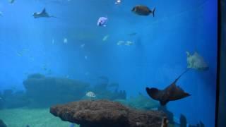 Palma de mallorca/Aquarium