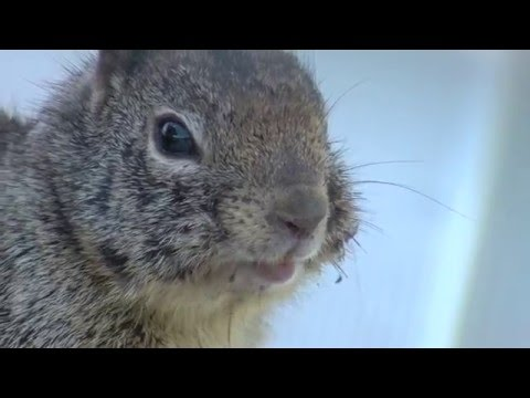 An Entirely Too Long, Squirrels at SCCMAS Video