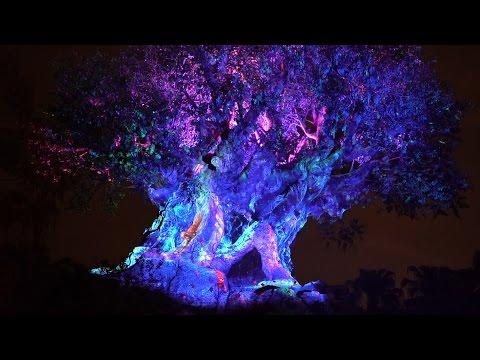 Disney's Animal Kingdom is The Best Night Time ParK | Night Time Safari & Tree Of Life Show
