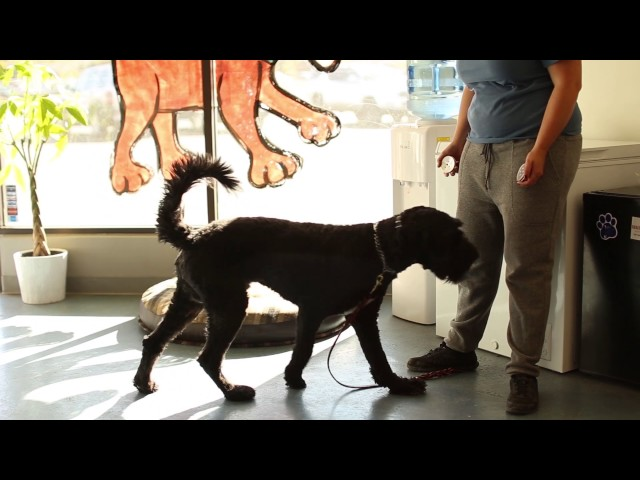 Dogs Who Serve- Diabetic Alert Dog Training by Salt Lake City Dog Trainers