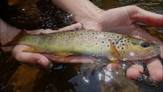 CLEAR Water BROWN TROUT Fishing!!!