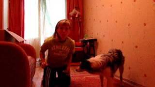 Смелая собака 1