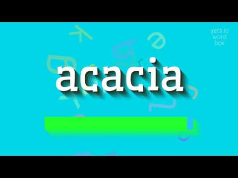 How To Say Acacia High Quality Voices