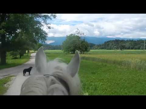 Travel video – Lippizaner Horseriding Slovenia  | Lipica Stud Farm - Radolca