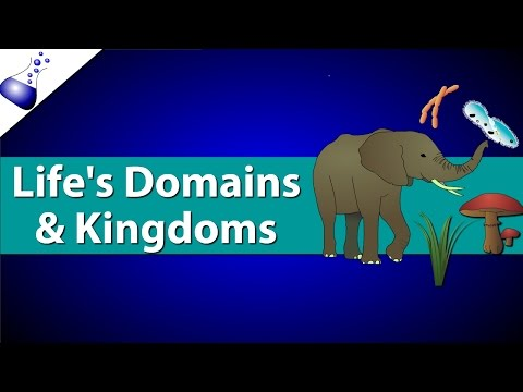 Domains and Kingdoms of life