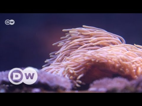 A climate refuge for corals | DW English