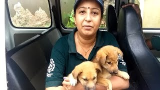 Humane Society International saves animals from India floods!