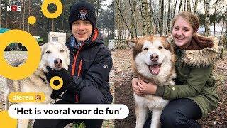 Luke en Iris kunnen racen met honden