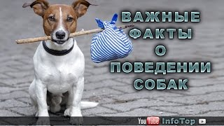 Важные факты о поведении собак