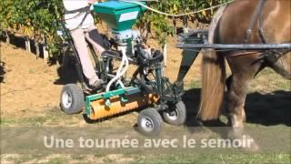 EQUITRACTION Travaux d'automne dans les vignes en TRACTION ANIMALE oct 2015