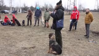 О последствиях кастрации собак(собаки, кастрация, школа дрессировки собак Ринг., 2015-04-07T14:00:15.000Z)