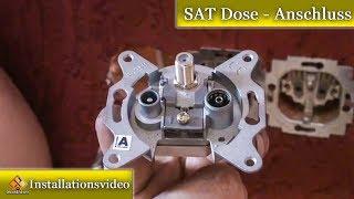 TV Dose / SAT Dose reparieren & einbauen von M1Molter