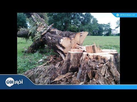 ألماني يفوز بكأس العالم لقطع الأشجار  - 13:22-2018 / 8 / 8