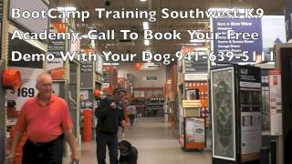 Dog Training, Rottweiler Puppy Training Southwest K9 Academy