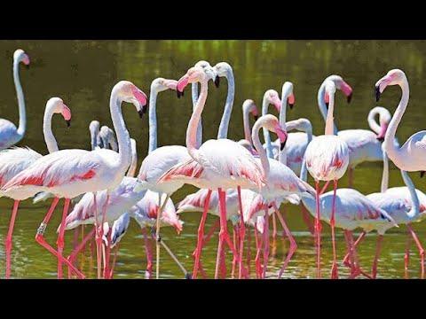 Ras al khor wildlife dubai creek (flamingos)