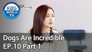 Dogs are incredible | 개는 훌륭하다 EP.10 Part 1 [SUB : ENG/2020.01.28]
