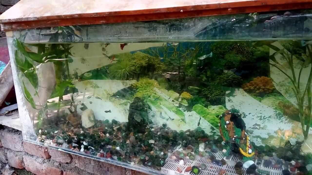 Elegant Outdoor Guppies In Fish Tank Aquarium