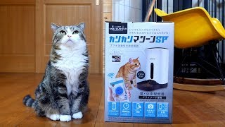 新しい給餌器とねこ-the-new-automatic-feeder-and-maru