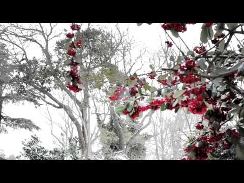 Vaktinde Gel Sevgilim - Orhan Gencebay– Lyric Video - HD