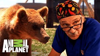 Osos rescatados son atendidos por el Dr. Jeff | Dr. Jeff, Veterinario | Animal Planet