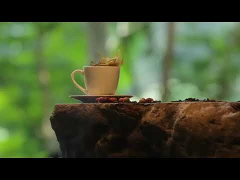 Bali Pulina Coffee Plantation Bali, Indonesia - YouTube