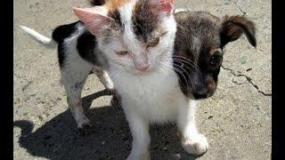 Бездомные животные: дай им шанс на жизнь .